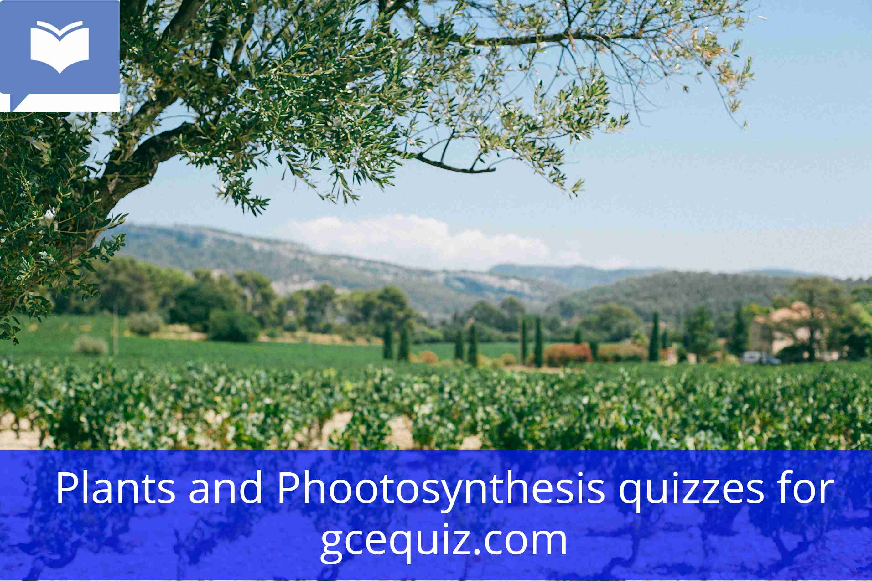 Plants and Photosynthesis quiz
