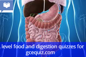 food and digestion quiz