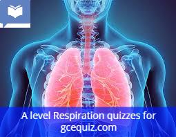 Respiration quiz