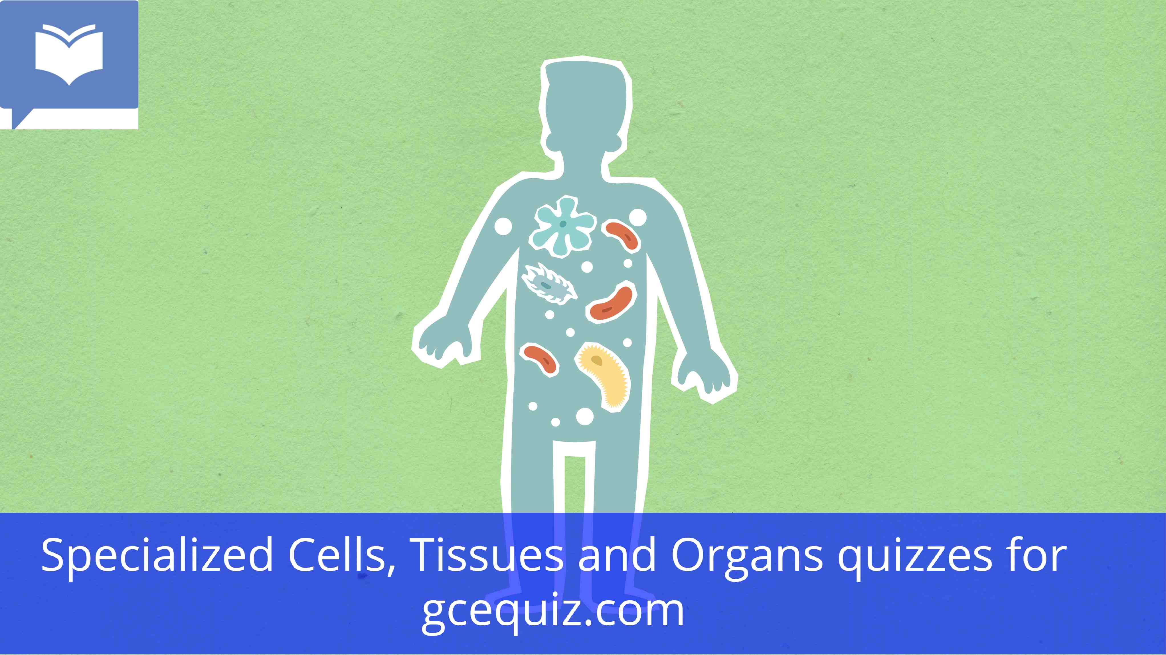 Specialized Cells, Tissues and Organs Quiz